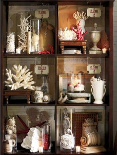 Sea Shells & Corals Collection Display.