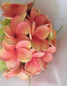 #CARING FOR #PLUMERIAS Watering is simple, just think of a rainy and dry season that the plant is accustomed to. When the plant has leaves and or flowers, typically March/April till November/early December you can water frequently, even every day in the hottest summer days.