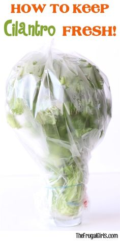 How to Keep Cilantro Fresh Tip - at TheFrugalGirls.com
