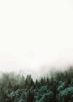 Stylish print of forest