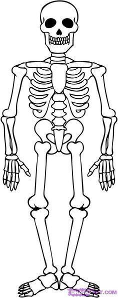 Human skeleton for Halloween celebration colouring page / Dekokin Skeleton Drawing Easy, Human Skeleton For Kids, Skeleton Craft, Skeleton Drawings, Halloween Drawings, Easy Drawings, Picture Of Human Skeleton, Dragon Skeleton, Skeleton Arm