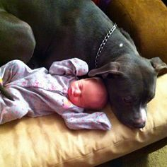 Don't tell me all pit bulls are vicious... My 1 yr old pit Diesel snuggling my 4 day old daughter