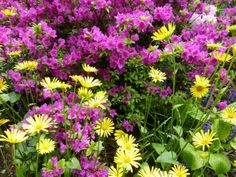 Children will love bright colored flowers in their garden.