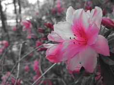 More Flowers - B&W