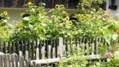 vegetable garden fencing, vegetable garden fence ideas, via YouTube.