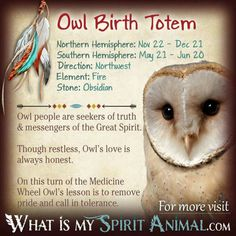 Learn about all 12 Native American Zodiac Signs & Native American Astrology! In-depth info on the personality, traits, & compatibility of each birth totem Native American Zodiac Signs, Native American Totem, Native American Spirituality, Native American Symbols, American Indians, Spirit Animal Totem, Animal Spirit Guides, Animal Totems, Ying Y Yang