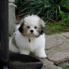 Dogs and puppies funny teddy bears 63 New ideas Teddy Bear Puppies, Cute Puppies, Dogs And Puppies, Havanese Dogs, Pet Dogs, Dog Cat, Animals And Pets, Baby Animals, Cute Animals