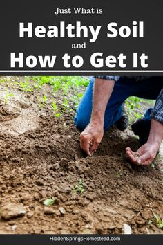 Healthy Soil How to Get It
