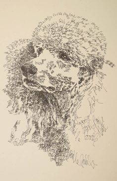 Poodle Standard: Dog Art Portrait by Stephen Kline - Art drawn entirely from the word Poodle. He also can add your dog's name into the lithograph. drawdogs.com : drawdogs.com His collectors number in the thousands from over 20 countries and every state in the US. Kline's dog art has generated tens of thousands of dollars for dog rescues worldwide. http://drawdogs.com/product/dog-art/poodle-standard-dog-portrait-by-stephen-kline/