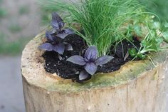 DIY Log Herb Garden + More Outdoor Fall Projects >> http://blog.diynetwork.com/maderemade/2015/11/06/outdoor-diy-projects/?soc=pinterest