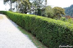 Cercas vivas são plantas dispostas em fileiras, que formam barreiras e tem a função de diminuir ruídos, reduzir a poeira, servir como quebra vento, esconder