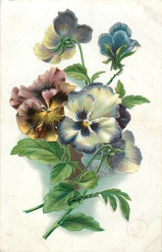 pansies, five blooms, three face away, purple and yellow left, blue & white to right, two stems at lower left
