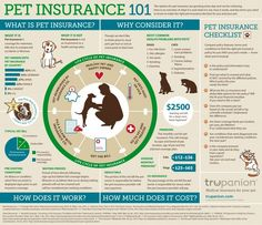 Pet Insurance 101 [infographic] FEBRUARY 13, 2014 |  BY JASMIN  |  ANIMALS