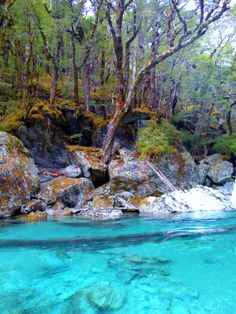 Top hiking trips New Zealand Tui and Rimu Trips #newzealandhikes #tuitrip #rimutrip Routeburn track-New Zealand