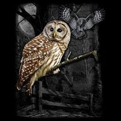 Wilderness Owl  T - SHIRT  Item no. 218a - pinned by pin4etsy.com