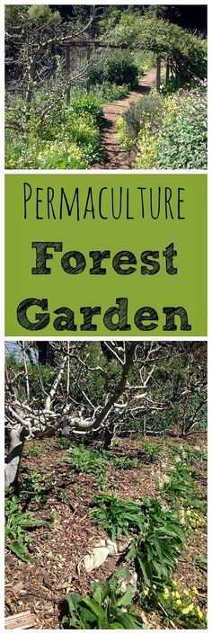 A permaculture forest garden is a great design to strive for! Learn all about food forests and forest gardens.