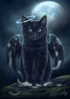 Angel cat art for our beloved black cats. Cat Wisdom 101 Art by Tabitha.❤️ Angel cat art for our beloved black cats. Cat Wisdom 101 Art by Tabitha. Wallpaper Gatos, Cat Wallpaper, Baby Animals, Cute Animals, Black Cat Art, Black Cats, Halloween Cat, Halloween Drawings, Halloween Illustration