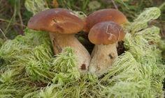 природа, грибы, растение