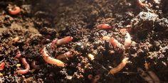 Die Wurmkiste - und der Biomüll ist gegessen! | BIORAMA