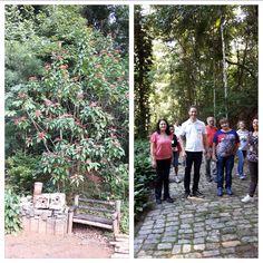 Lace a Vida: Exuberância Verde e Educação Ambiental em Timóteo -MG