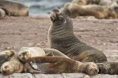 See a Sea Lion in the Wild - Bucket List Dream from TripBucket
