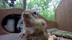 Squirrel proof house (chipmunk/Squirrel/cat bird