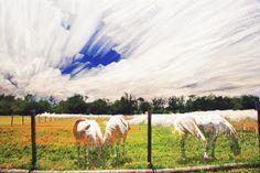 Indian Paints - Timestack - TGBurnett Photography