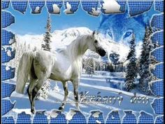 white horse in the snow wolf Good Night Song, Good Night Friends, Good Night Sweet Dreams, Have A Good Night, Good Night Image, Good Night Quotes, Horse Photos, Horse Pictures, Snow Wolf