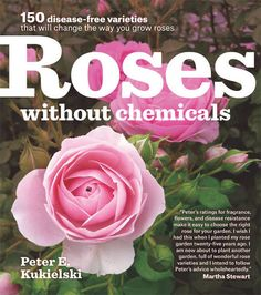 Buy Roses Without Chemicals: 150 Disease-Free Varieties by Peter Kukielski at Mighty Ape NZ. Spray no more! Roses have a reputation for being finicky garden plants that require chemicals and fertilizers to stay healthy and disease free. Rose Varieties, Growing Roses, Rose Leaves, Pallets Garden, Garden Landscape Design, Buy Roses, Winter Garden, Garden Plants, Fairy Gardening