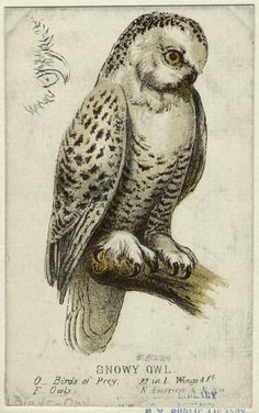 Owl engraving / Collections of Objects / Collections of Things / Displaying / Vintage / Ideas / Nature / Antique