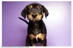 Pup? by greta