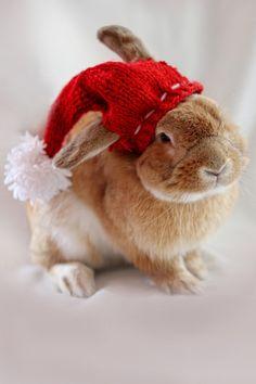 Sweet little rabbit wearing a Christmas hat!