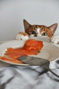 ,,,˄ •̀◡ु•́ ˄,,,  i'm sure no one will notice if i  just sneak a little bit...