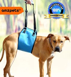 Dog Lift Harness by AMZpets - Support Sling Helps Dogs With Weak Front or Rear Legs Stand Up, Walk, Get Into Cars, Climb Stairs. Best Alternative to Dog Wheelchair. RECOMMENDED BY VETERINARIANS ** See this awesome image  : Dog Carriers and Travel Products