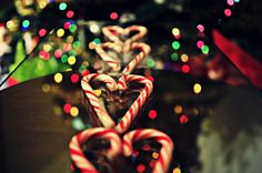 just girly things♥eating the candy canes off the tree in Christmas Tumblr Christmas Pictures, Christmas Tumblr, Christmas Photos, Days Until Christmas, Merry Christmas And Happy New Year, All Things Christmas, Christmas Time, Xmas, Christmas Ideas