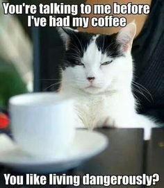 Funny cat memes that will make you snort uncontrollably. Today, we will seem via a few Cat memes. These Cat memes are epic and terrific h. Funny Cat Memes, Funny Cats, Funny Animals, Hilarious, Funniest Animals, It's Funny, Memes Humor, Stupid Funny, Cat Quotes