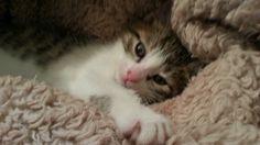 My cute snuggle kitty, Winifred Olivia.