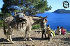 Mit Eseln wandern auf Elba