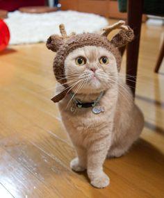 Reindeer pet hat!