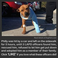 Inspiring story about a pitbull rescued by police officers. #dogs #stories #inspiring