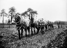 Le labourage BB98_10630. © English Heritage
