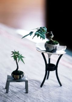 mame bonsai 豆盆栽 oh my goodness this is adorable!!