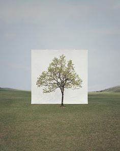Tree photographs by Myoung Ho Lee