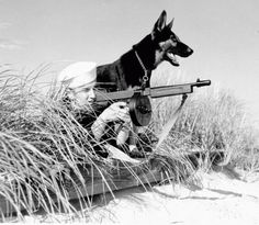 A sailor and his dog in the Pacific