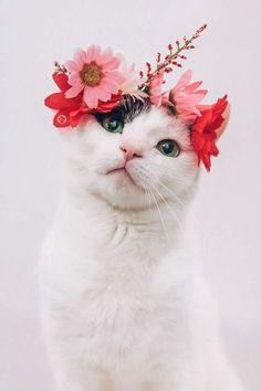 So photogenic! | cute cat | flowers