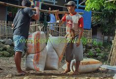Karawang lumbung padi