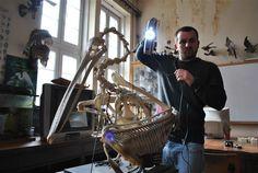 Threeding et la 3D pour scanner les oiseaux en voie de disparition! http://www.lifestyl3d.com/cui-cui-fait-le-moineau-croa-croa-fait-le-corbeau-bzz-bzz-fait-limprimante/