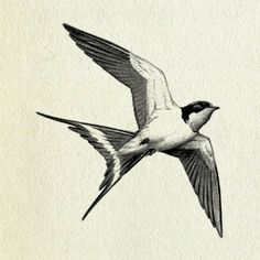 I love the strong lines, angles and symbol of freedom. If I use a bird image I identify with sparrows and robins, or geese, NOT swallows. I feel like the swallow image is a bit too popular for me to like it on me. But I have to say I can see the appeal of it because of the great shape and lines.
