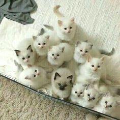 Soo many cuties!