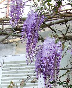 memories of our wisteria covered arbor